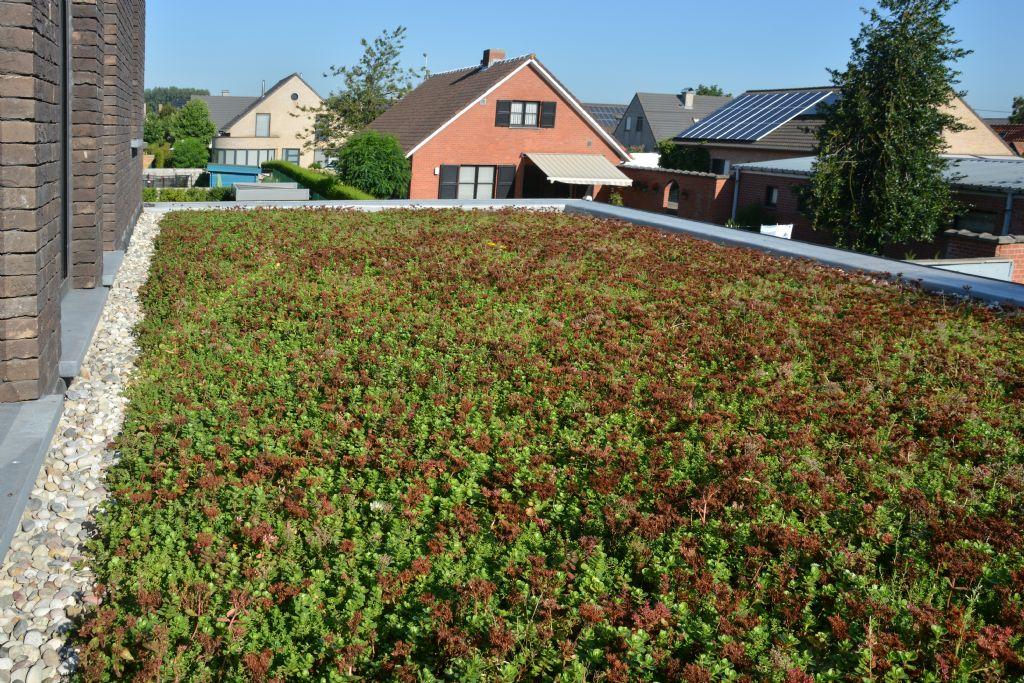 Quand le toit se fait jardin l gante maison avec touche for Superficie toiture